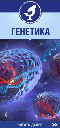 Генетика в медицинском центре репродуктивных технологий АИСТ
